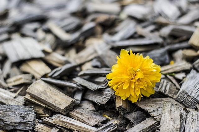 Žlutý květ na dřevě