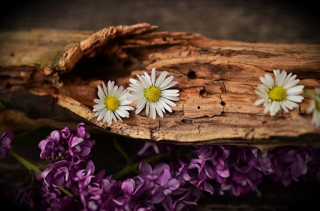 Sedmikrásky na dřevě